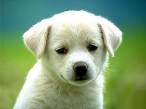 Определение особенностей характера щенка