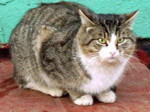 Потеют ли кошки?