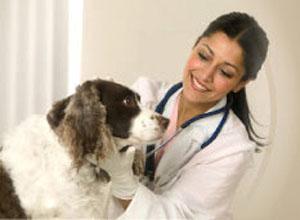 Когда обращаться к ветеринару
