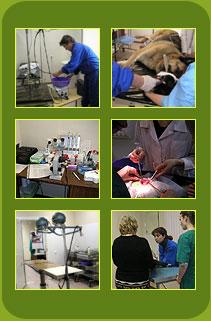 Круглосуточная ветеринарная клиника Соколиная гора